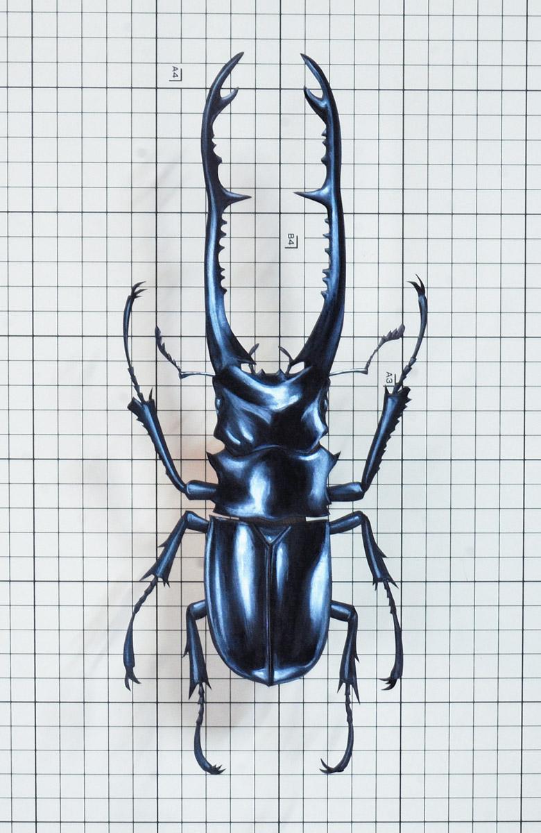 Prosopocoilus-giraffa01