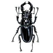 Stang beetle